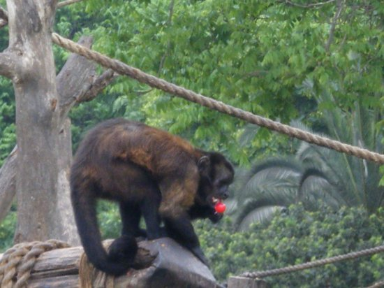 Monkey at Zoo